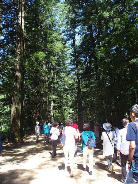 モミの木が茂る散策路